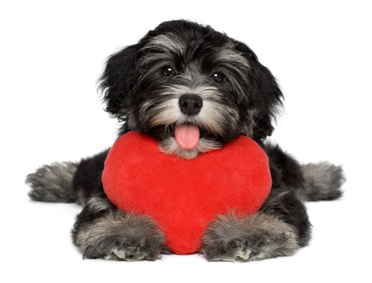 3 Reasons Why You'll Love Bayshore Animal Hospital