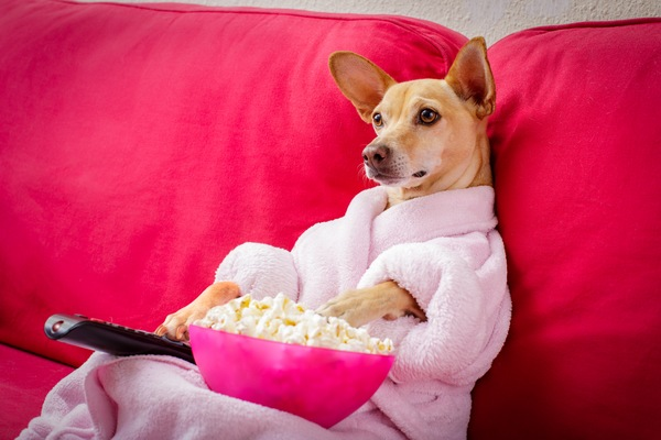 4 Pet-Themed Movie Types to Watch with Your Furry Friends
