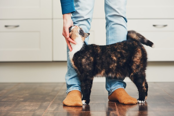 Learn the Language of Your Cat's Tail