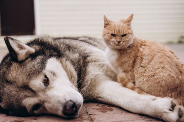 5 Tips from Your Port Orange Vet to Help Your Cats and Dogs Get Along